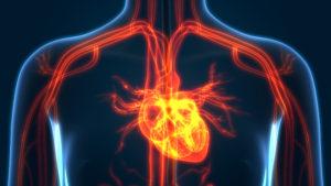 Transesophageal Echocardiogram Gilbert, AZ